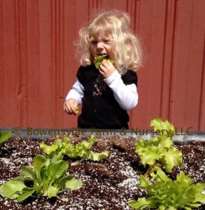 Bowensville Farm and Nursery Raised Bed class
